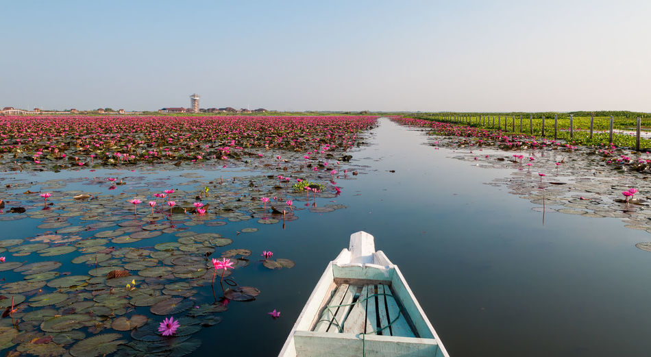 Flowers floating on water against clear sky