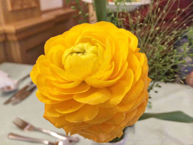 Blooming Close-up Day Flower Flower Head Focus On Foreground Fragility Freshness No People Petal Table Decoration Yellow