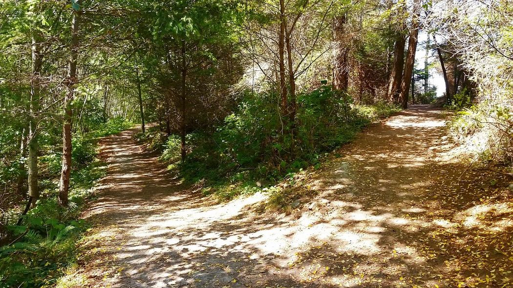 Don't be afraid to pick your path. Paths Paths Of Life Paths We Take Trail Nature No People Growth Beauty In Nature Outdoors Decisions Fork In The Road Be. Ready.