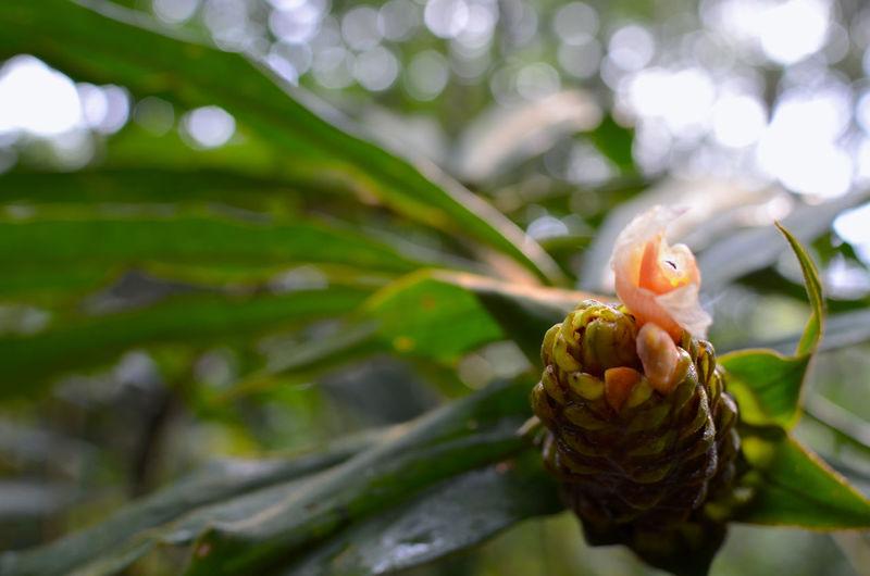 Amazing Amazonia Amazzonia Ecuador Flor Flowers Puyo  Unacartolinalgiorno