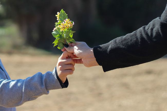 Backgrounds Beauty In Nature Blossom Branch Carefree Childhood Depth Of Field Flower Focus On Foreground Fragility Fun Growth Hobbies Innocence Leaf Love Nature No People Outdoors Season  Selective Focus Tree Valentine Valentine's Day