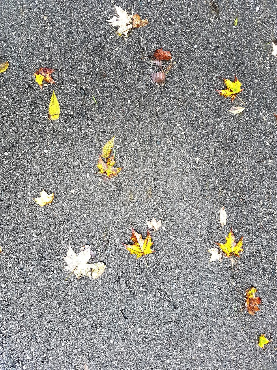 leaf, autumn, high angle view, no people, fallen, outdoors, nature, day, change, flower, close-up, beauty in nature, fragility