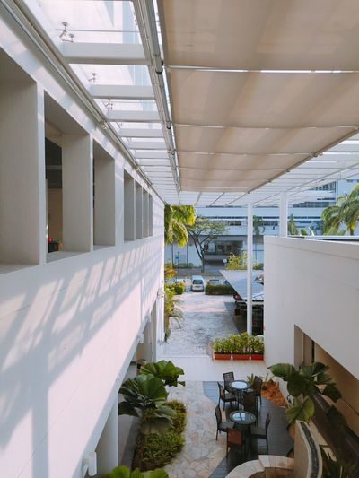 Potted plants in corridor of building