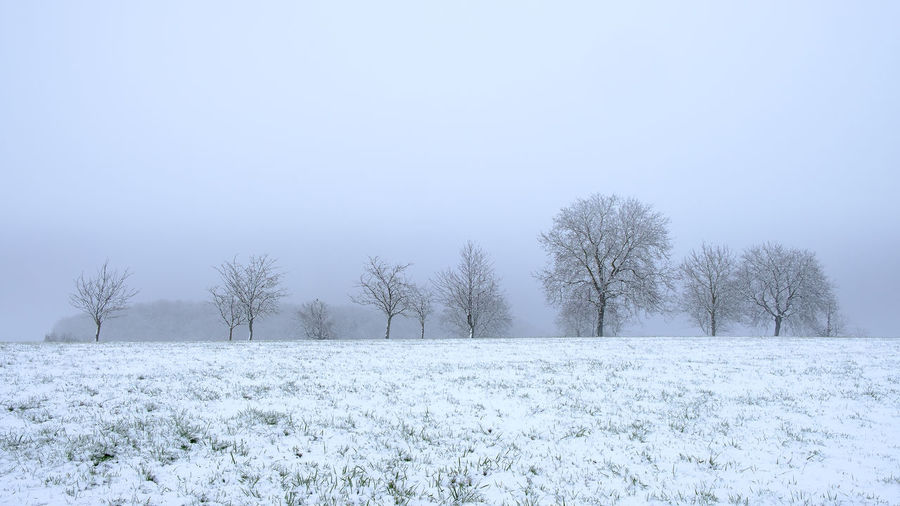 First Snow in southern Germany 2019 Snow Cold Temperature Winter Plant Tranquility Tree Beauty In Nature White Color Field Scenics - Nature Environment Land Tranquil Scene Landscape Nature No People Sky Day Covering Outdoors Snowing Blizzard Fog Südschwarzwald Blackforest