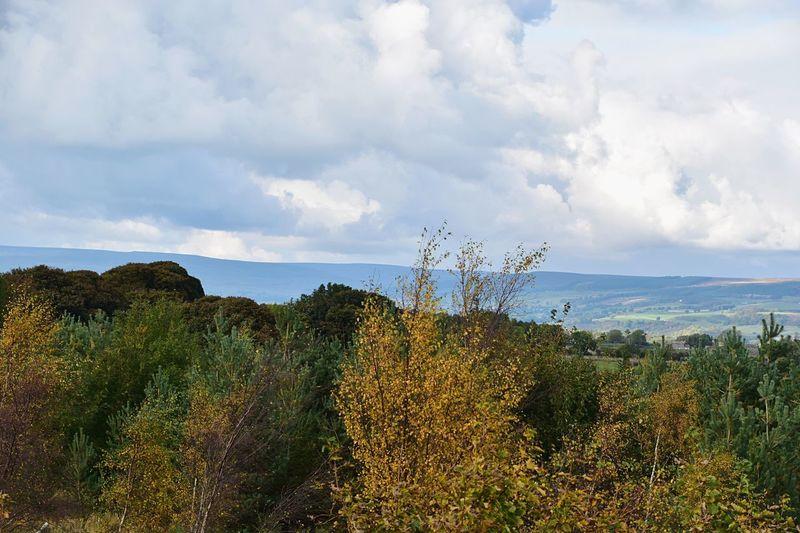 Taking Photos Trees A66 Landscape Nikon D5500