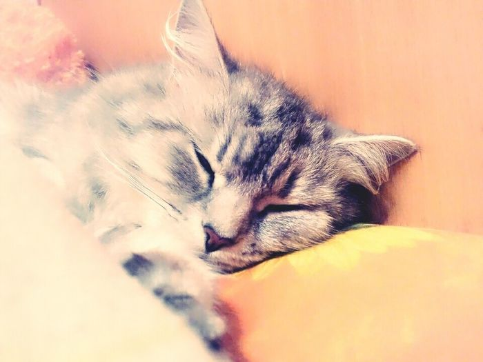 I wonder that she dreams?))