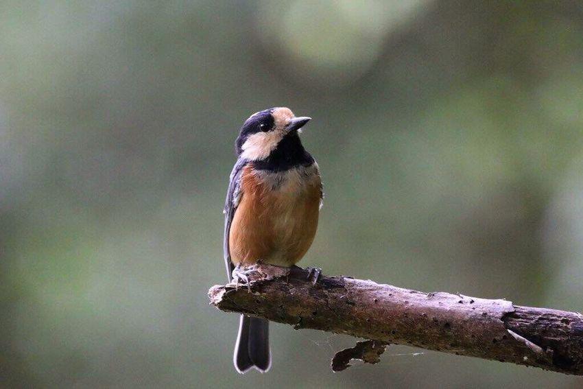 おはようございます♡昨日は野鳥を追いかけて森の中を散策してきました😊カワセミは撮れなかったけど、可愛いヤマガラと話してきました😊今日も宜しくお願いします🎵 野鳥 Nature_collection 今日もキミと 繋がる想い 💛 癒しの野鳥