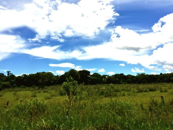 Nature Sky Tree Growth Landscape Scenics Tranquility Tranquil Scene Beauty In Nature Outdoors Cloud - Sky Day No People Field Plant Grass