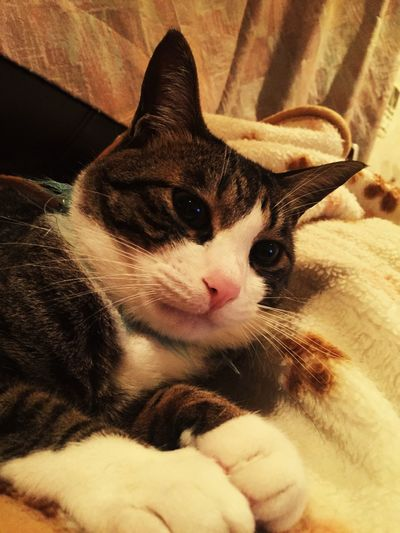 Pets Corner Cat Cat♡ Lovely