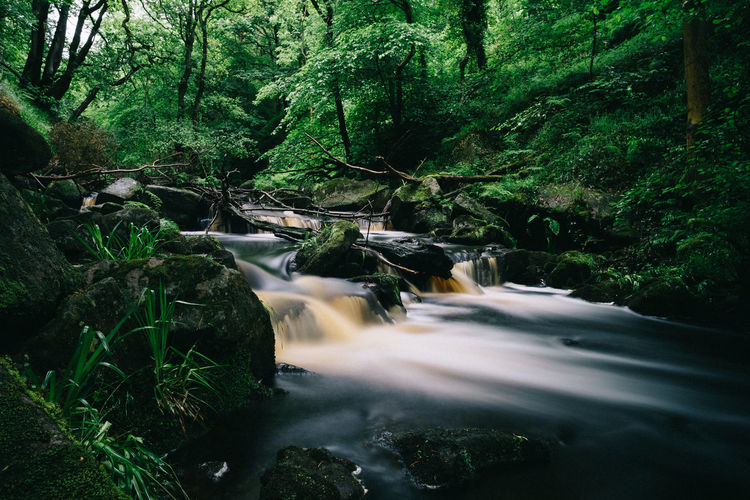 Green Color Long Exposure Shot Water Reflections Beauty In Nature Countryside Day Flowing Water Forest Forest Photography Growth Land Long Exposure Nature No People Outdoors Outdoors Photograpghy  Peak District  Plant Tranquility Tree Water Waterfront