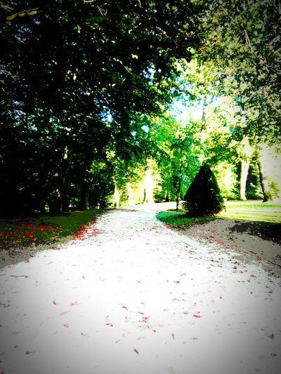 Un camino imaginario pero real Imagina Tu Camino