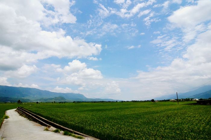 Farmland The Great Outdoors - 2015 EyeEm Awards Looking For New Destinations Beautiful Nature Landscape Rice Field Sky And Clouds Blue Sky The Traveler - 2015 EyeEm Awards Beautiful Taiwan