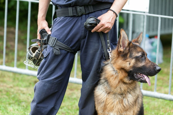 Police officer with the german shepherd police dog Adult Bomb Close-up Criminal Day Detection Dog Domestic Animals Drug Explosives German Shepherd Guarding One Person Only Men Outdoors People Pets Police Police Dog Policeman Terrorism Tracking