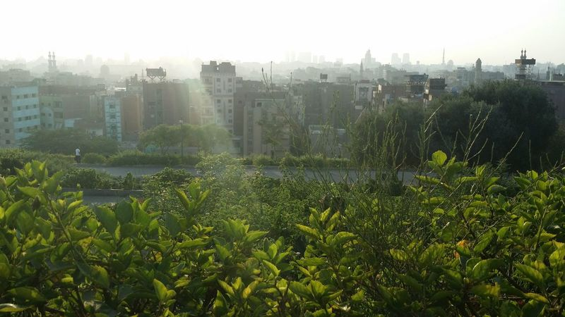 Azhar Cat Day Day Shots Egypt Green Color High Section Nature Old Buildings Outdoors