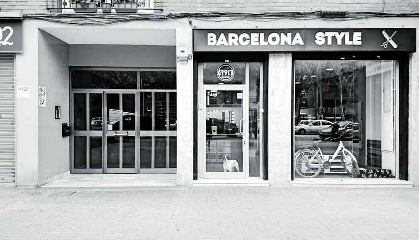 Guess who Dog Bulldog Street Photography - EyeEm Awards 2016 Barcelona España Europe Barcelona Streets