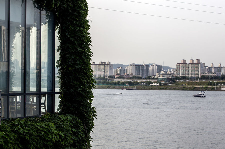 Architecture Building Building Exterior Built Structure City City Life Day Green Color Growth Han River Hangang Ivy Modern Nature No People Outdoors Residential Building Residential District Rippled Seonyudo Sky Travel Destinations Tree Water Window