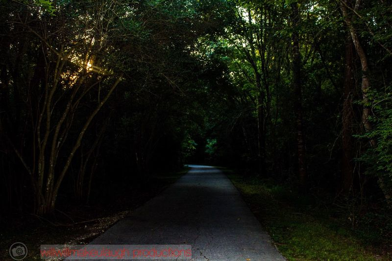 Tree The Way Forward Forest Road Nature Transportation No People Outdoors Night be strong and take chances . Remember u only live once