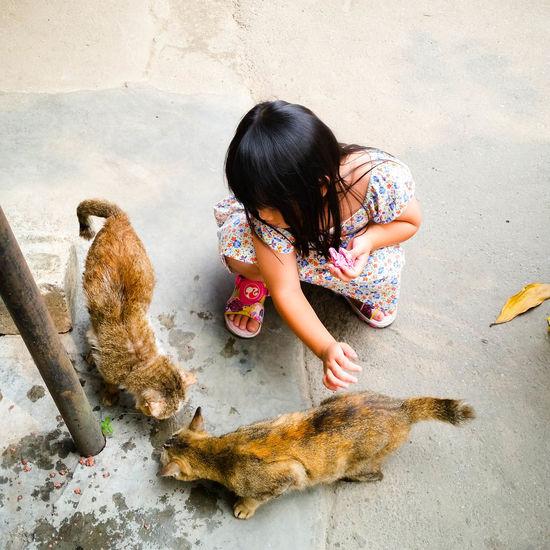 Little Girl Littlegirl Love Animal Loveanimal Loveanimals Loveanimals❤️ Love Animals Cats Cat Kids Love Cats Love Cat Love Cats Lovecats Lovecats❤️ Lovecat💜 Lovecat  Lovecatsforever LoveCat<3 Kids Cat Kuala Lumpur Malaysia  Kuala Lumpur Malaysia