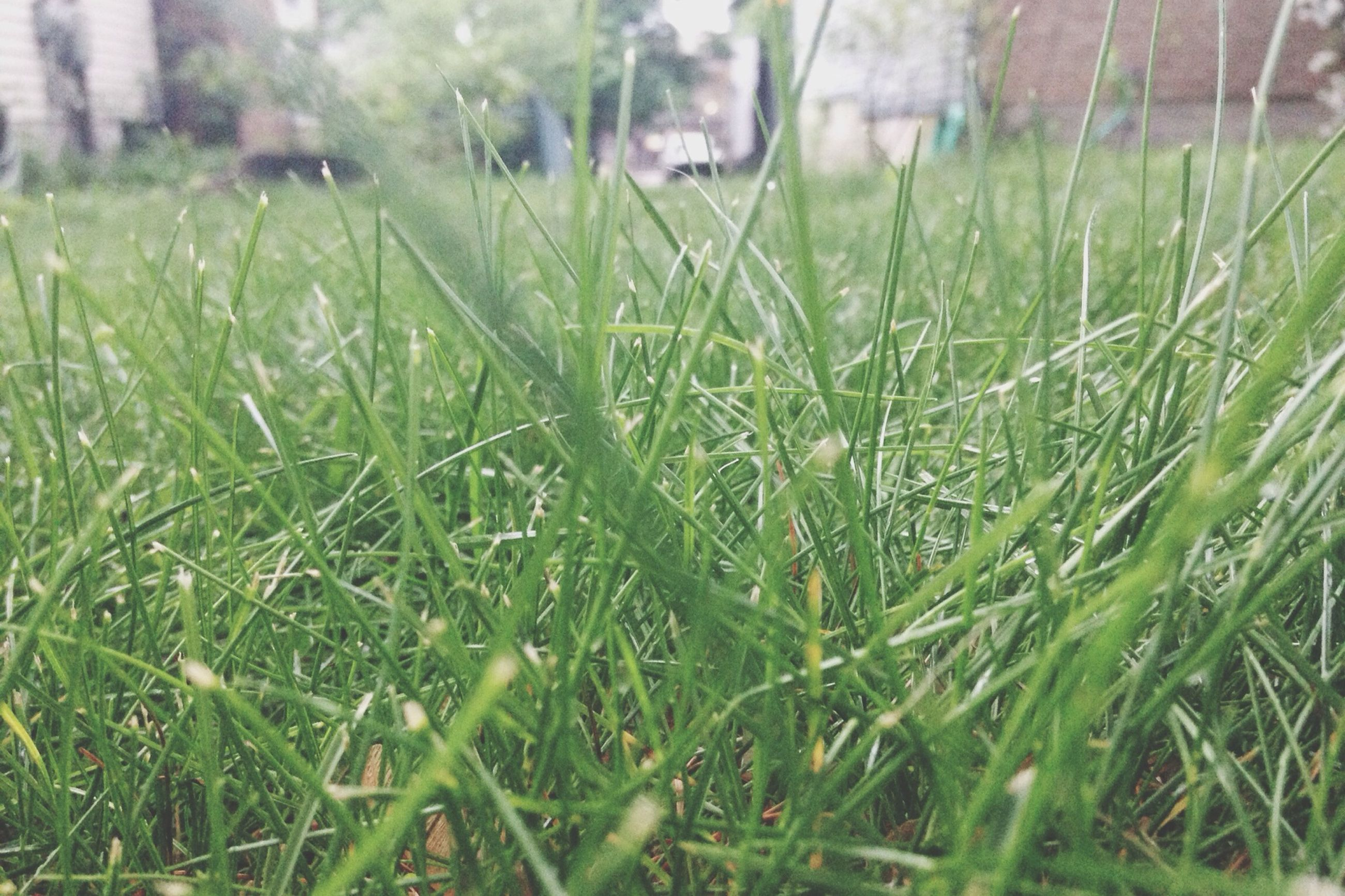 grass, green color, field, growth, grassy, blade of grass, nature, plant, selective focus, focus on foreground, beauty in nature, tranquility, close-up, day, outdoors, drop, green, no people, wet, freshness