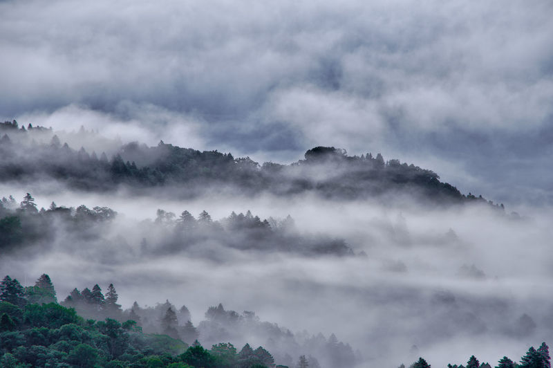 Scenic view of forest in the fog