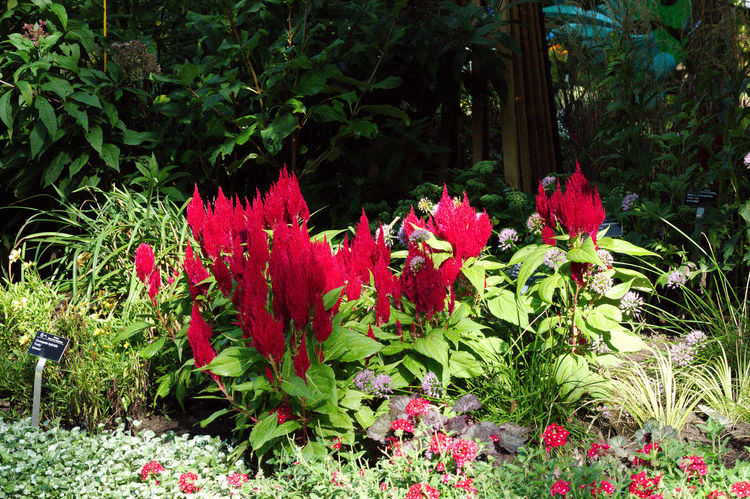 flowerbed Beauty In Nature Day Flower Flower Head Flowerbed Flowerbeds Flowering Plant Fragility Freshness Front Or Back Yard Garden Green Color Growth Land Leaf Nature No People Outdoors Plant Plant Part Red Tranquility Vulnerability