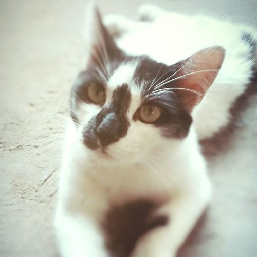 Michi fuchi ✌ First Eyeem Photo Cat