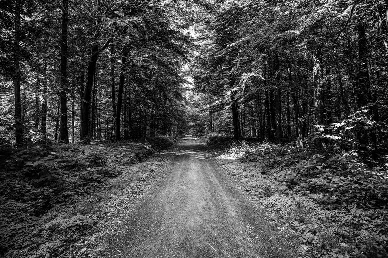 Black & White EyeEm Nature Lover Alone In The Woods Beauty In Nature Black And White Blackandwhite Diminishing Perspective Direction Forest Growth Nature Plant The Way Forward Tranquil Scene Tranquility Tree Treelined WoodLand