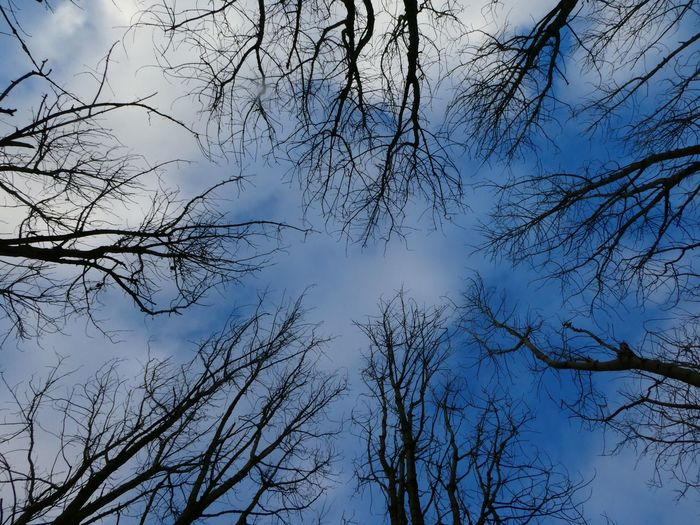 Free Holders wood Aysgarth WoodLand Landscape_photography Landscape_Collection Winter Tree Sky Low Angle View Tranquility Beauty In Nature Branch Nature No People Growth Scenics - Nature Cloud - Sky Forest Outdoors