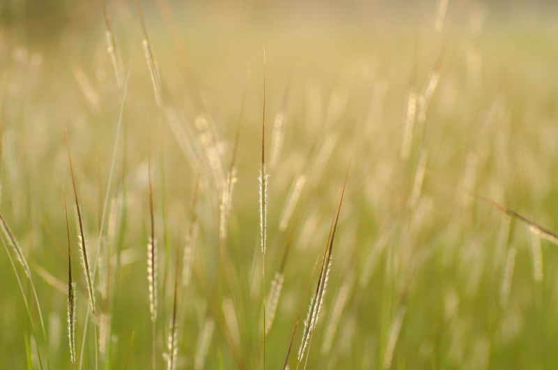 Agriculture Beauty In Nature Cereal Plant Close-up Crop  Day Ear Of Wheat Environment Field Field Flower Flower Grass Freshness Grass Grass Growth Meadow Nature No People Outdoors Plant Sunset Tranquility Wheat