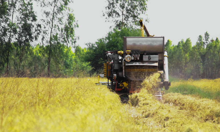 Agriculture Argiculture Day Harvest Harvest Season Harvest Time Harvested Harvester Harvesting Harvesting The Field Harvesting The Land Industrial Nature No People Outdoors Rice Rice - Cereal Plant Rice Field Rice Fields  Rice Paddy Rice Planting Rice Terraces Ricefield Ricefields RiceTerraces