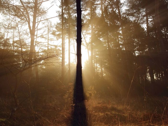 • Hope • IPhoneography Light Up Your Life Nature The Illuminator - 2014 EyeEm Awards