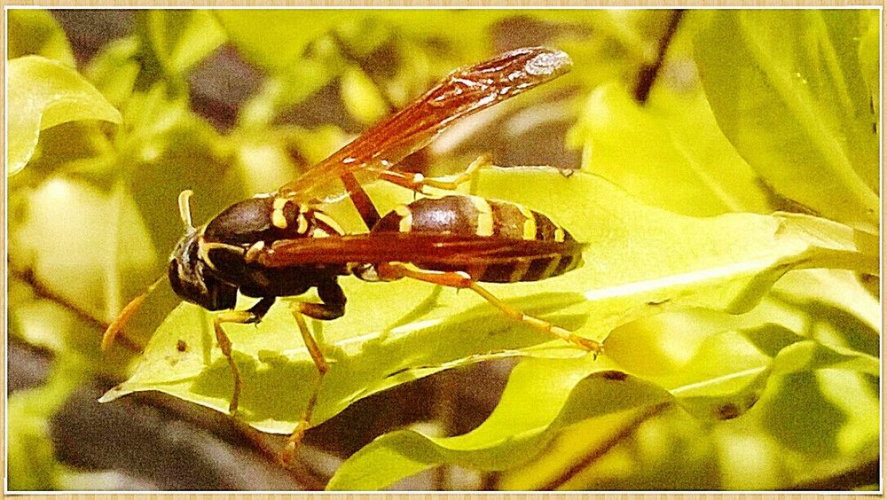 wasp hanging out in sun.