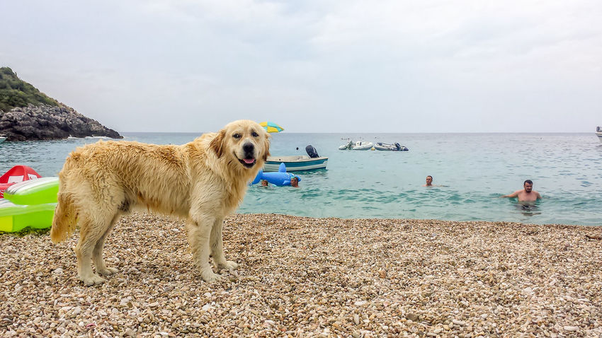 Dog at the beach! Albania Animal Themes Beach Beauty In Nature Day Dog Domestic Animals Golden Retriever Horizon Over Water Jale Beach Mammal Nature One Animal One Person Outdoors Outings  People Pets Retriever Sea Sitting Sky Summer Vlore Water Sommergefühle