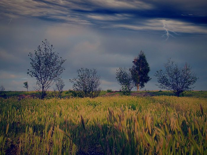 light and reflection Grass Beauty In Nature Tranquil Scene Tree Tranquility