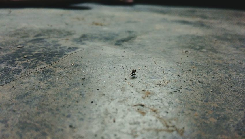 Ant on the floor, carrying its food!! Macro Photography Ants