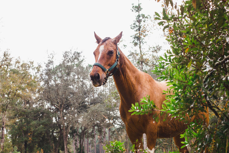 Horse standing in a tree