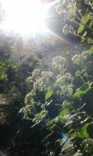 Nature Sunlight Flowers Flower Beautiful Nature Many Flowers To Enjoy Duke Island Park Nj Trishann Artlovelaughter