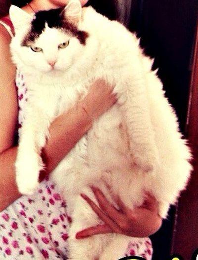 Кот подруги *_*
