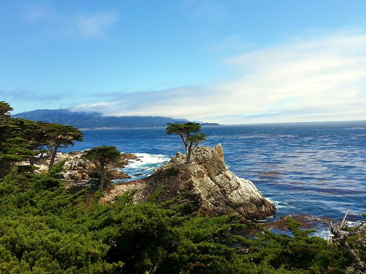 Wonderful Landscape with a Lone Cypress @ 17 Mile Drive :::: Roadtrip USA Eyeemnaturelover Landscape_Collection Fantastic View Landscape Beautiful Nature Wonderful Nature