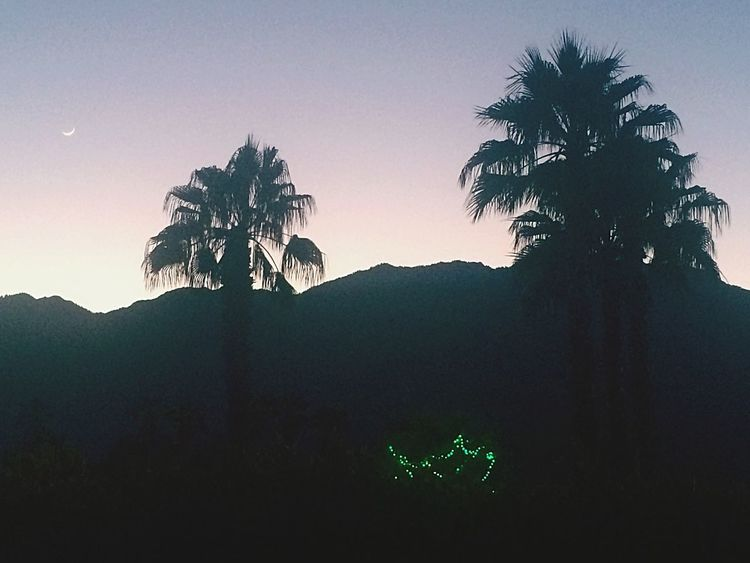 Palm Trees Palm Springs EyeEm Best Shots - Trees For The Love Of Trees ~ Landscape Photography Landscape_Collection Merry Christmas!
