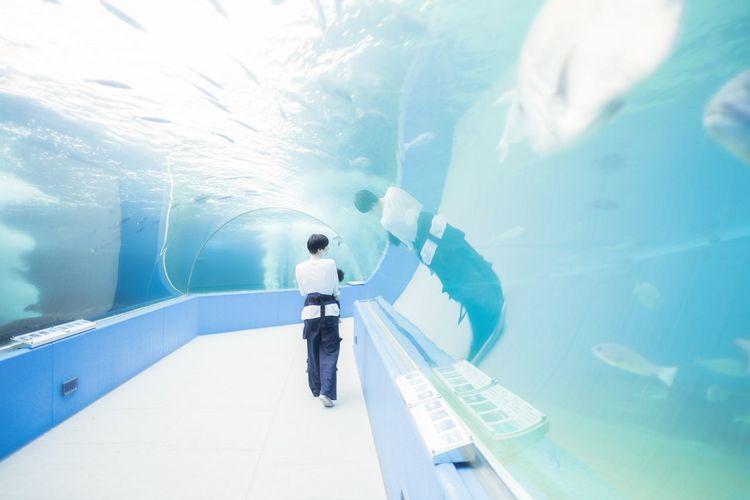 Aquarium(Resize)
