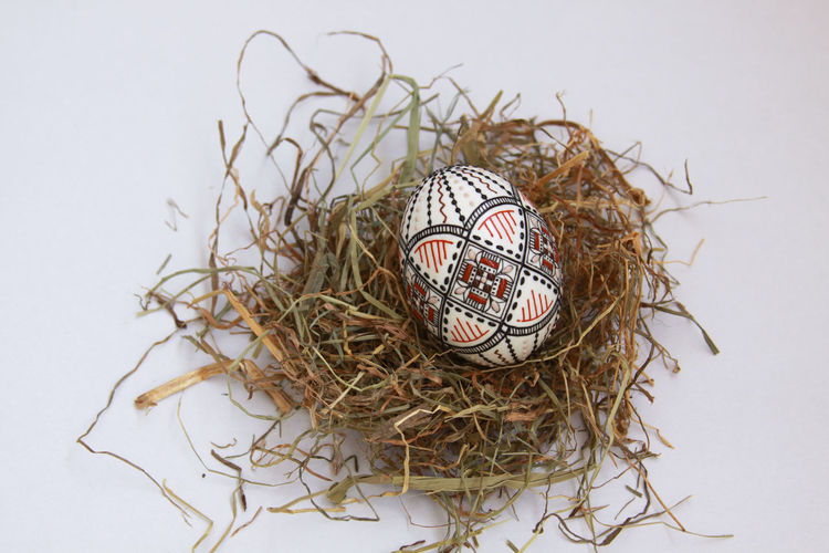 Close-up of eggs in nest against white background