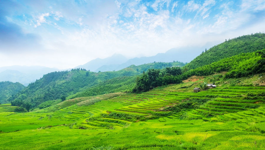 Fresh green fields in Sapa Plant Nature_collection Beauty In Nature Wallpaper Background Sky Outdoor View Land Landscape Mountain Rice Field Rice Sapa, Vietnam Fields Green Fresh Freshness Scenics - Nature Green Color Tranquil Scene Environment Tree Tranquility Agriculture Field Rural Scene Cloud - Sky Farm Growth Nature Idyllic No People Outdoors Rolling Landscape
