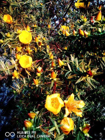 Fleur Flower Nature Yellow Beauty In Nature Fleur Jaune réunion