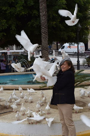Animal Wildlife Animals In The Wild Bird Flock Of Birds Outdoors People Spread Wings White Color