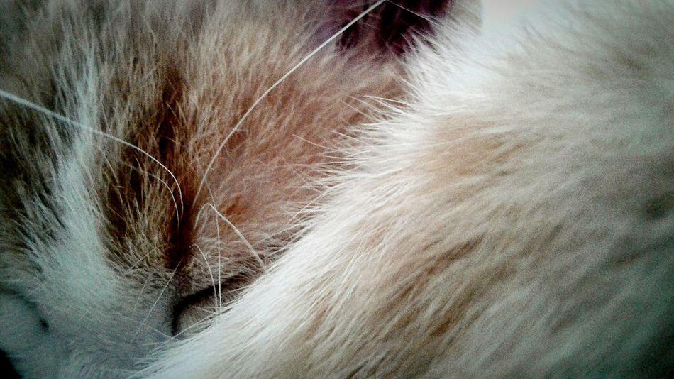 cat. Cats 🐱