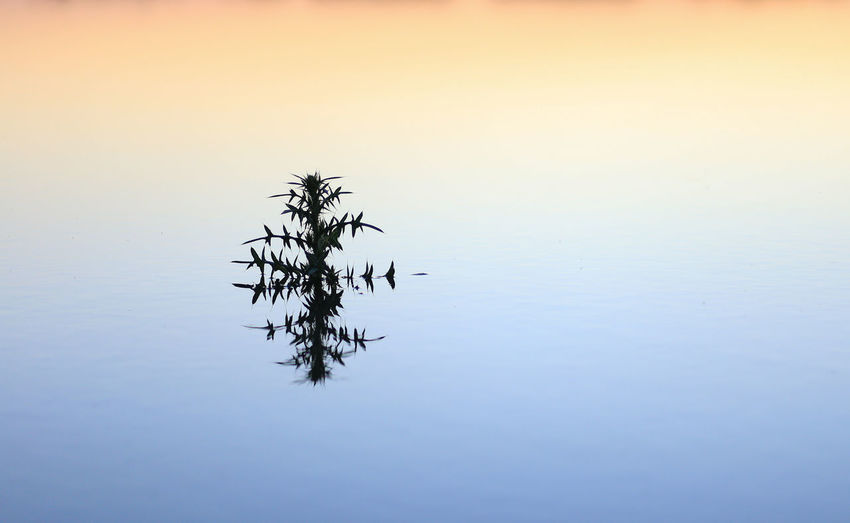 Plant by lake against sky during sunset