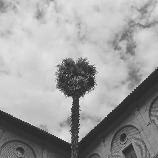 Palm Tree Dramatic Sky Dramatic Angles Monastery Religion Religious Architecture Black & White Growing Growth Life Palm Tree Roof Architecture B&w Black And White Black And White Photography Black&white Blackandwhite Blackandwhite Photography Bnw Building Exterior Built Structure Cloud - Sky Contrast Growth Low Angle View Outdoors Palm Trees Sky