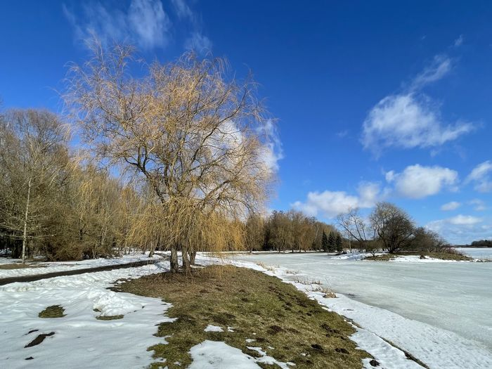 Trees on frozen plants against blue sky