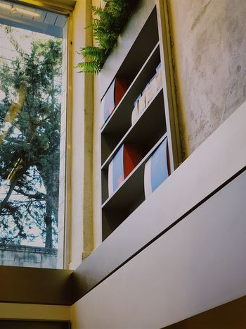 Window Architecture Built Structure Building Exterior Low Angle View Day No People Tree